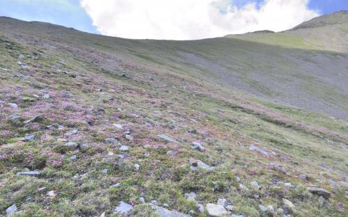 Paisatge de muntanya florit